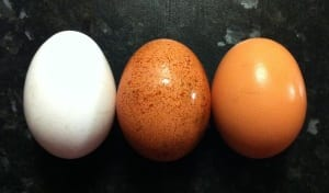 Egg_colours_wikipedia